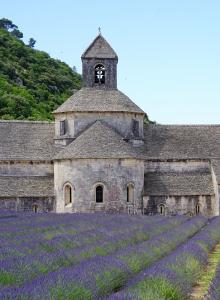 Coltivazione di lavanda presso l'Abbazia di Notre-Dame de Sénanque